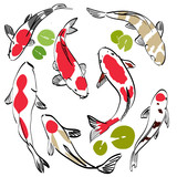 Koi fish vector. Red carp background with lotus leaves.
