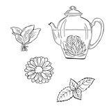 Teapot with tea and herbs sketch. Hand drawn vector illustration. Cartoon ink sketch. - 181319231