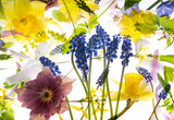 spring flowers on white background - 181321221