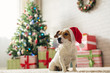 Dog Jack Russell Terrier in a house decorated with a Christmas tree and gifts wishes happy Holiday and  Christmas Eve