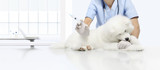 veterinary examination lively dog, hand with syringe on table in vet clinic