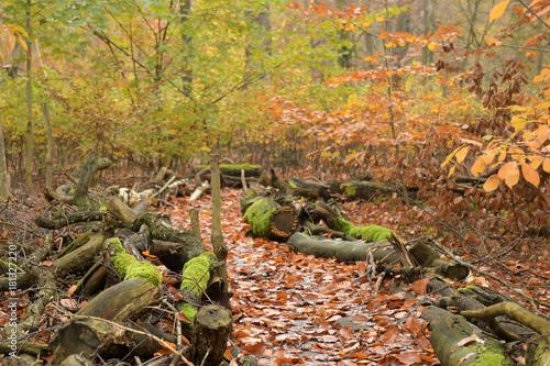 Fotobehang Weg in bos wegführung