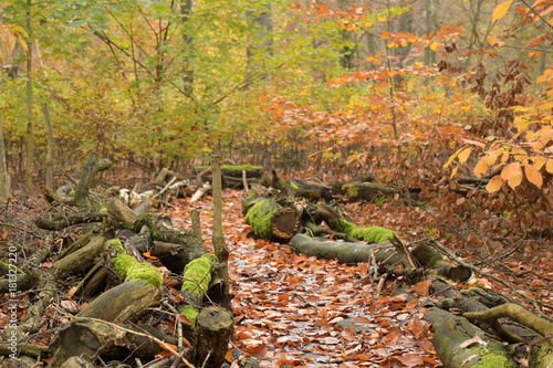 Foto op Canvas Weg in bos wegführung