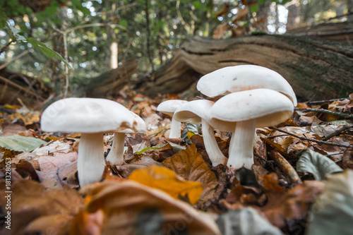 Papiers peints Nature Mushrooms in a forest in the Netherlands.
