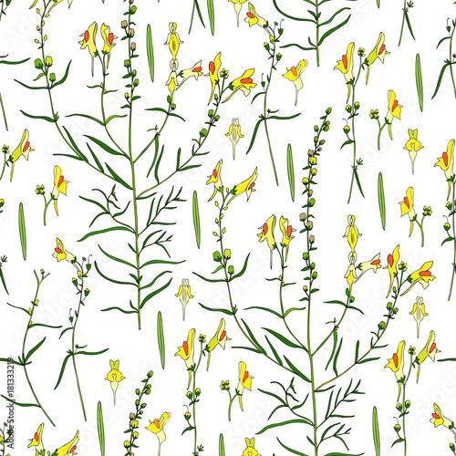 Seamless floral pattern Linaria vulgaris, common toadflax, yellow toadflax or butter-and-eggs is a species of toadflax, snapdragon, Plantaginaceae family, hand drawn vector colorful illustration