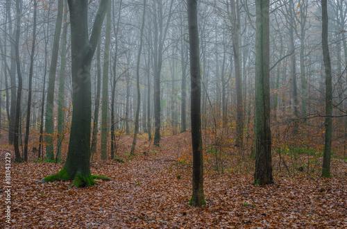 Fotobehang Weg in bos Pfad Wald Herbst Nebel Bäume
