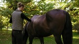 Shedding and brushing horse fur: young attractive woman grooming her beautiful brown horse standing in the field - 181363490