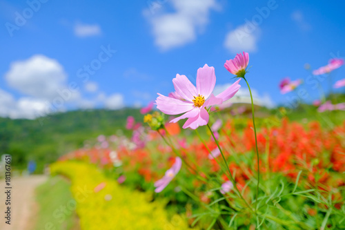 Pink flowers in field.