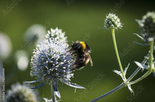 Aluminium Bee Bąk 3434