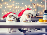 Dog and cat in christmas hat eating food