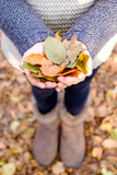 young girl holding yellow leaves in autumn - 181377009