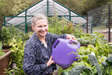 Older woman with short grey hair watering abundant garden with green house behind (selective focus) - 181380619