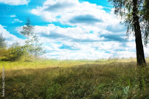 Plexiglas Berkenbos Beautiful landscape