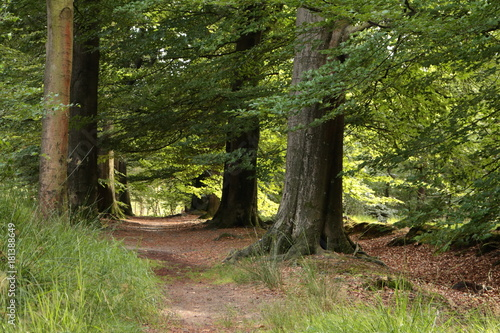 Papiers peints Nature Wandelen door het bos in de zomer