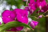 Pink orchid flowers with natural bokeh background