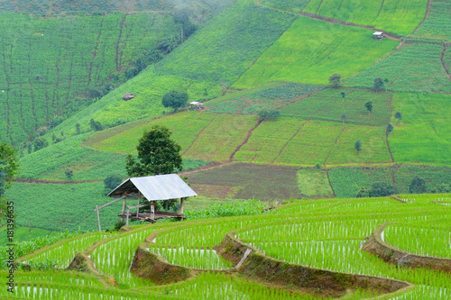 Deurstickers Rijstvelden view of green rice fields terrace mountain with cottage in countryside Land with grown plants of paddy and sea of fog at Pa Pong Piang, Thailand