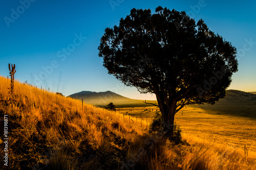 Papiers peints Morning Glory Juniper Tree, Golden Grass, November Sunrise