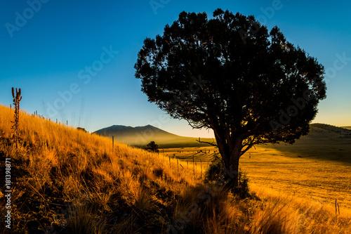 Foto op Canvas Ochtendgloren Juniper Tree, Golden Grass, November Sunrise