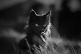 Chat dans l'herbe noir et blanc