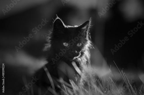 Kot w czarno-białej trawie