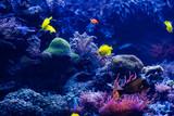 tropical Fish. Underwater world landscape