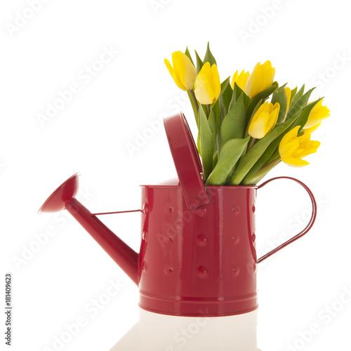 Fototapeta Yellow tulips in watering can