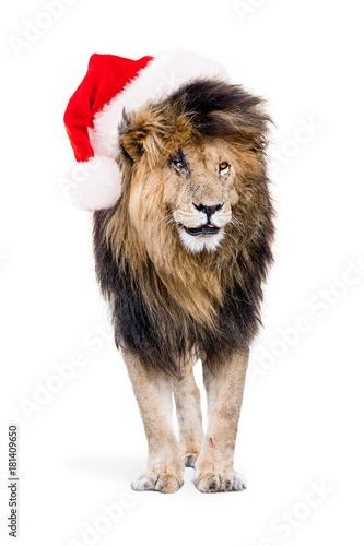 Fotobehang Lion African Lion Wearing Christmas Santa Hat