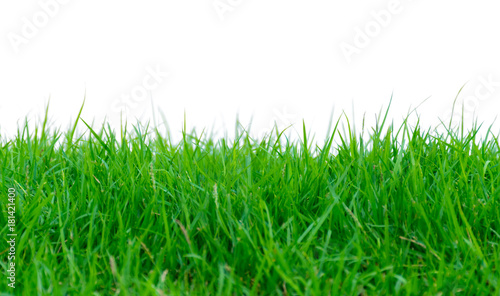 Green grass on a white background - 181421400