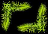 feuilles de palmier en fond de page noire - 181432213