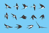 swallow flying flat icons set, vector illustration