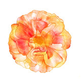 Isolated watercolor rose on a white background, golden toned - 181438253