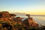 The lone cypress tree - 181444218