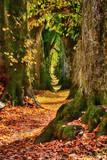 Herbstimpression - 181455650