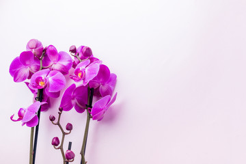 Beautiful purple orchid flowers on light background with copyspace for text, top view, flat lay