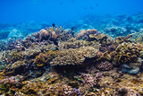 Coral reef and tropical fishes, Indian ocean. - 181469878