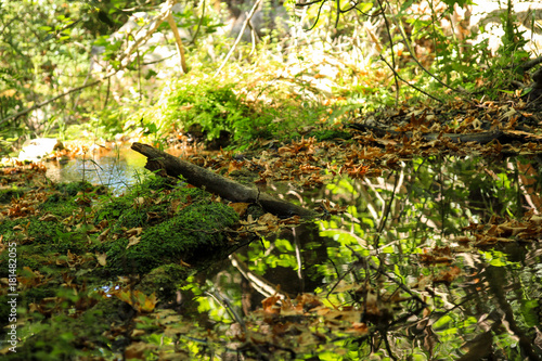 Tuinposter Fantasie Landschap One log in a pond with fallen leaves