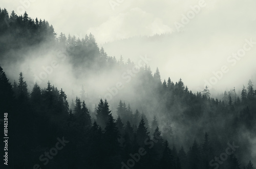 dark forest and mountains, foggy landscape - 181482848