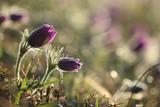 Fleurs du Printemps! - 181502495