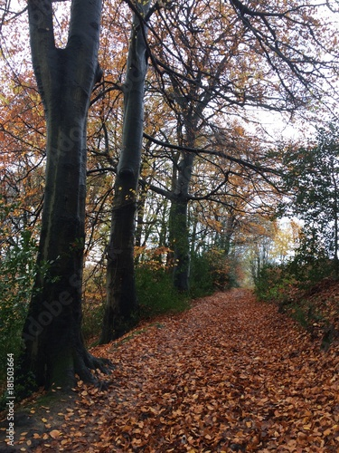 Fotobehang Grijze traf. Wundervolle Naturlandschaft im herbstlichen Wald