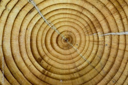 Staande foto Brandhout textuur Old Wood Texture