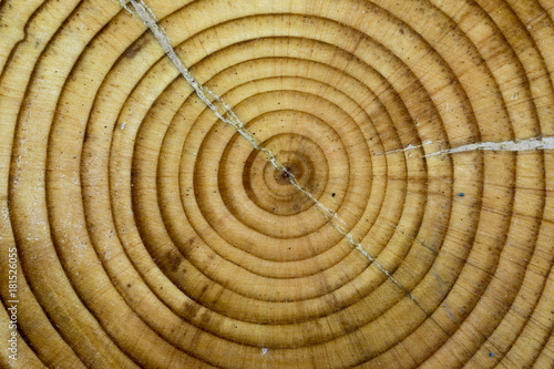 Foto op Canvas Brandhout textuur Old Wood Texture