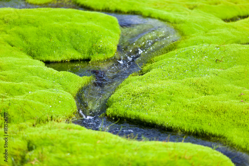 Fotobehang Lime groen Iceland Small River Stream with green moss