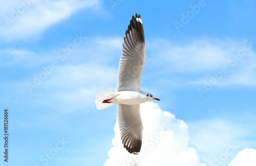 Fotobehang seagull flying in the blue sky
