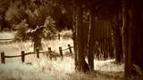 Cowboy walks with saddle, sepia - 181555625
