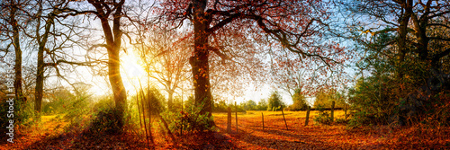 Papiers peints Photos panoramiques Beautiful autumn landscape with trees and meadows at sunrise