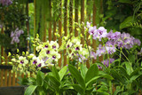 Beautiful orchid blooming in garden