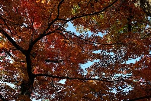 Keuken foto achterwand Bruin 用作公園の紅葉