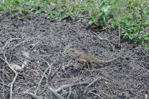 Aluminium Kameleon Chameleon on the lawn.
