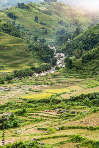 Deurstickers Rijstvelden Terraced Rice Field after harvest on mountain in Sapa