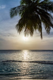 Palm tree and sunset at the sea - 181593280